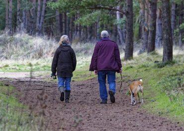 Rasy psów polecane seniorom