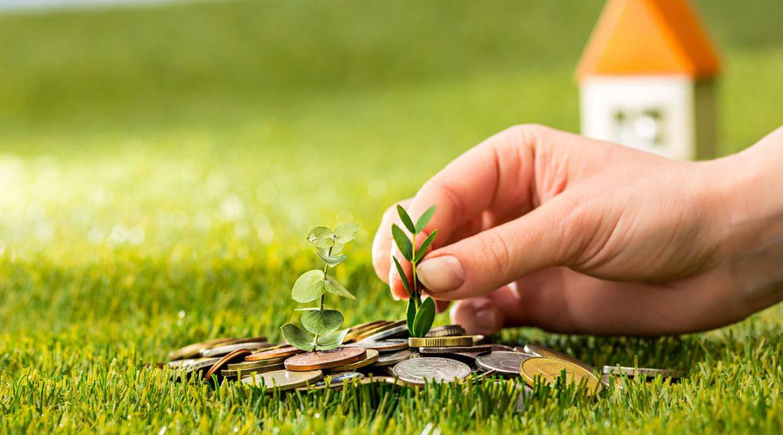 pieniądze na trawie