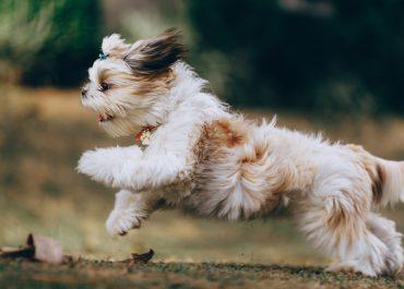 Jakie akcesoria warto kupić psu?